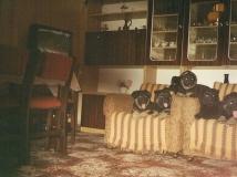 rok 1995.jpg