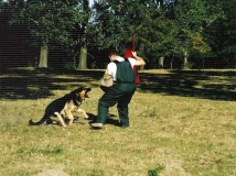 dog-attack-photo-10-working-german-shepherd breeding-napor