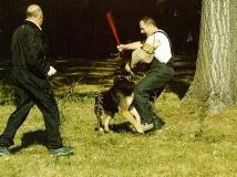 dog-attack-photo-2-working-german-shepherd breeding-napor