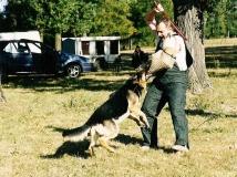 dog-attack-photo-3-working-german-shepherd breeding-napor