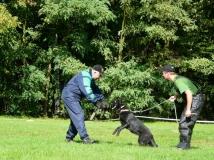 dog-attack-photo-4-working-german-shepherd breeding-napor