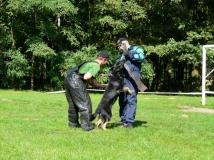 dog-attack-photo-5-working-german-shepherd breeding-napor