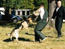 dog-attack-photo-6-working-german-shepherd breeding-napor