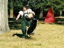 dog-attack-photo-9-working-german-shepherd breeding-napor