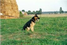 Urx Pet Keram