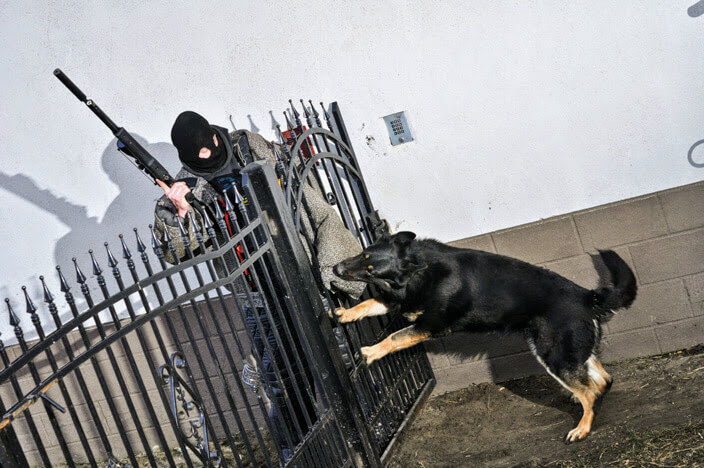 Biting the potential burglar by dog from Working German Shepherd Breeding Napór