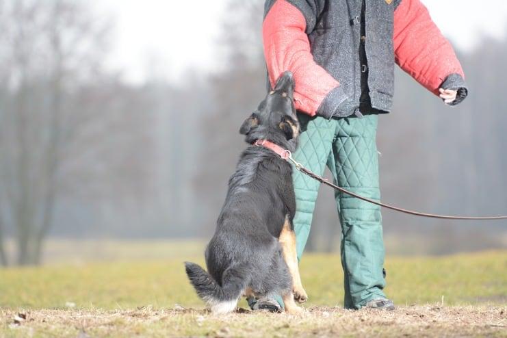 fer-napor-pies-fotografia-05-hodowla-uzytkowych-owczarkow-niemieckich-napor