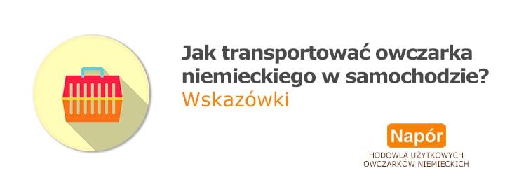Jak transportować owczarka niemieckiego w samochodzie? Wskazówki - grafika na okładkę