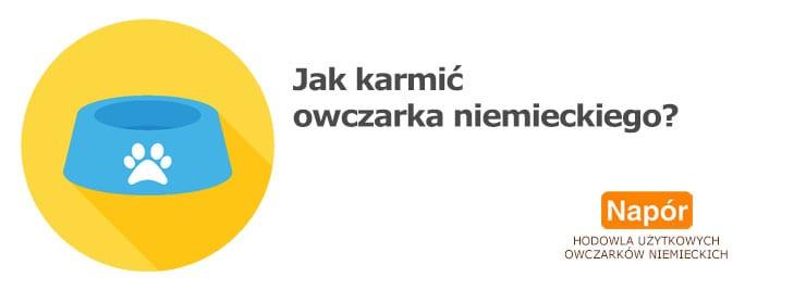Karmienie owczarka niemieckiego - obrazek okładkowy