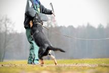 for-napor-fotografia-03-hodowla-uzytkowych-owczarkow-niemieckich-napor